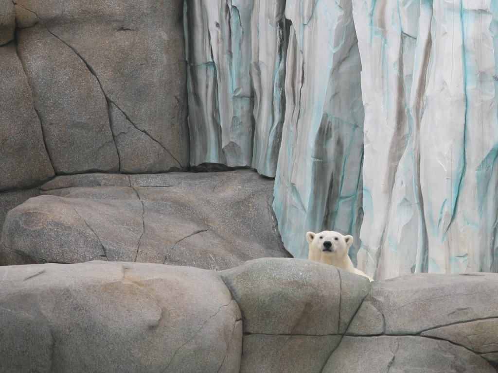 Preview Eismeer Hagenbeck 2012