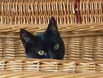 Katze im Korb / pixabay.com/STetzner