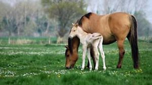 Pferde / Fotolia / Barbarette