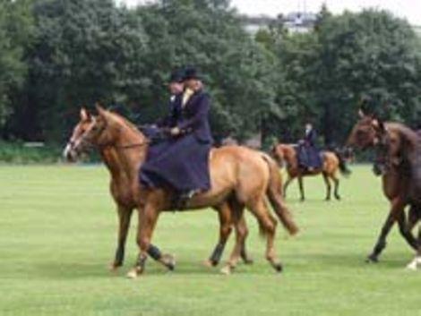 Pferde / B. Krause