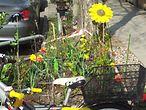 Urban Gardening Bild König / Melanie Truemper
