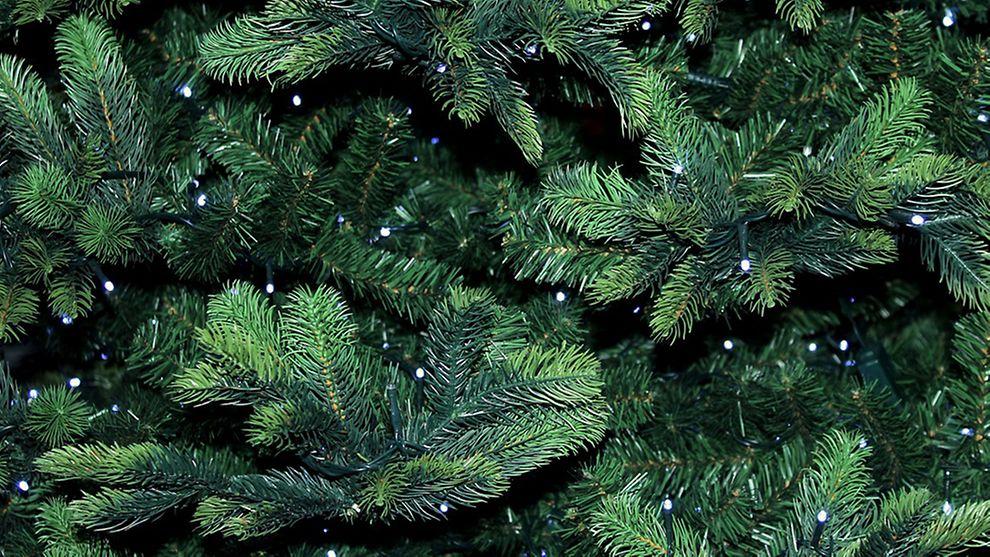 Foto Weihnachtsbaum.Weihnachtsbaum Entsorgen In Hamburg Hamburg De