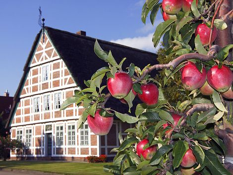 Apfelernte im Alten Land / imago stock & people