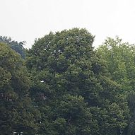 Botanischer Sondergarten / Helge Masch